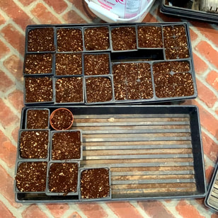 DIY Potting Mix ready for seeds